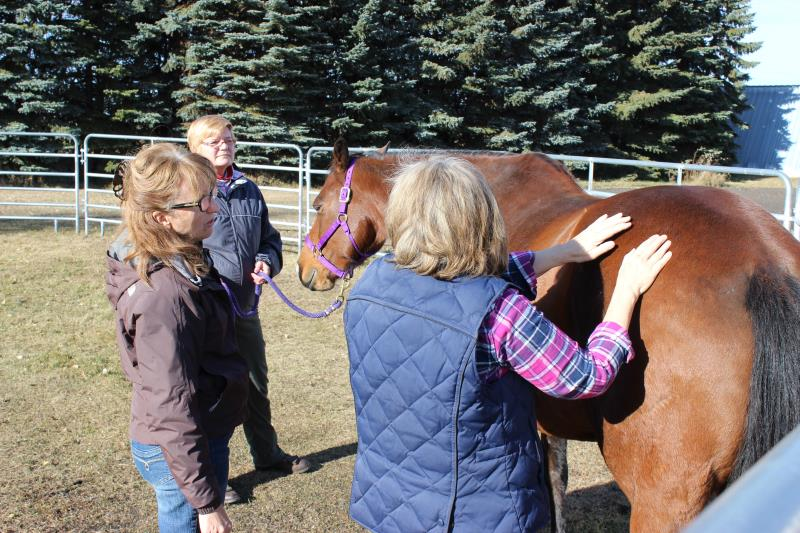 Image #4(Equine Facilitated Learning & Coaching)